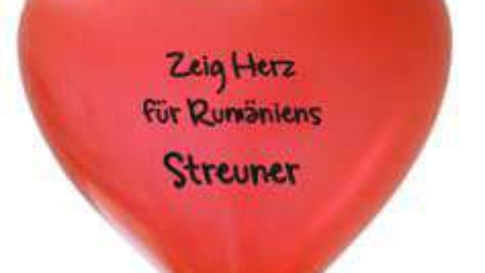 Hamburger Hunde demonstrieren für rumänische Streuner
