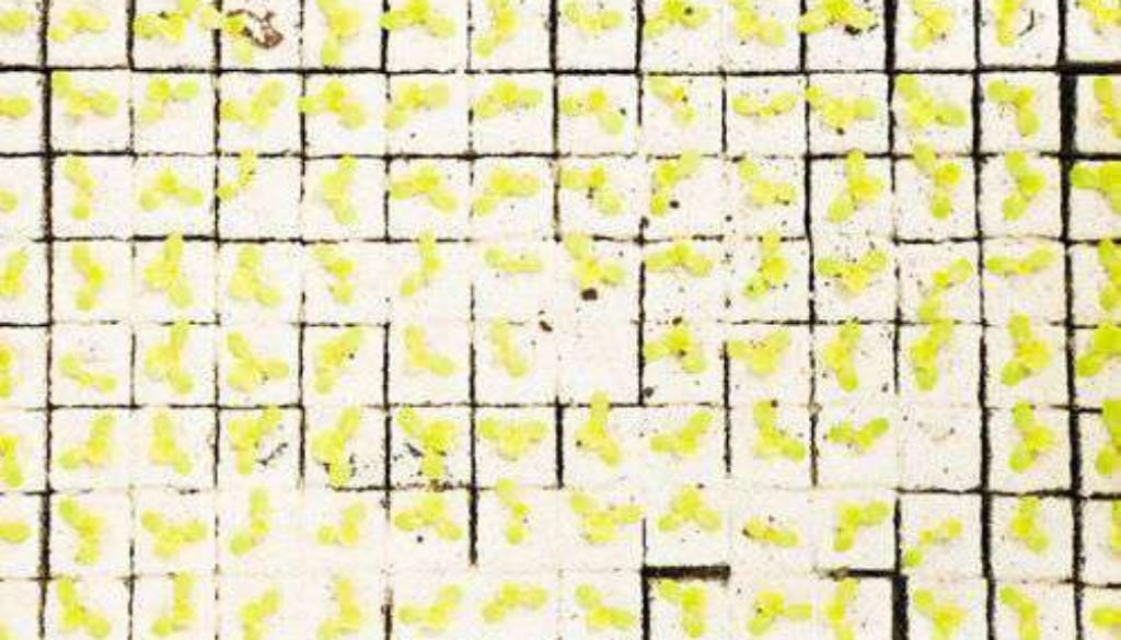 K640_Spohler-The_Third_Day-12