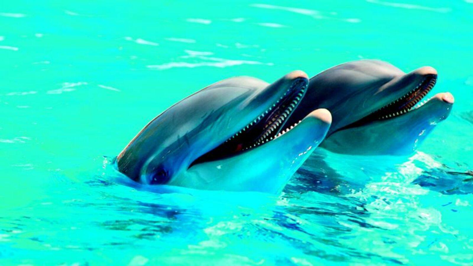 Toner-Kartuschen für Delfinschutz
