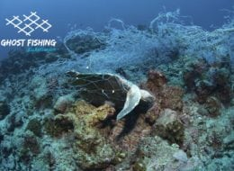 Ghost Fishing Lebanon Turtle