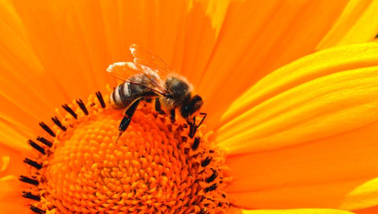 Hilfsaktion für Bienen