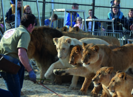 Tiere im Zirkus: Circus Krone 28.9.-22.10.