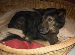 Hunde von Obdachlosen können im HTV übernachten