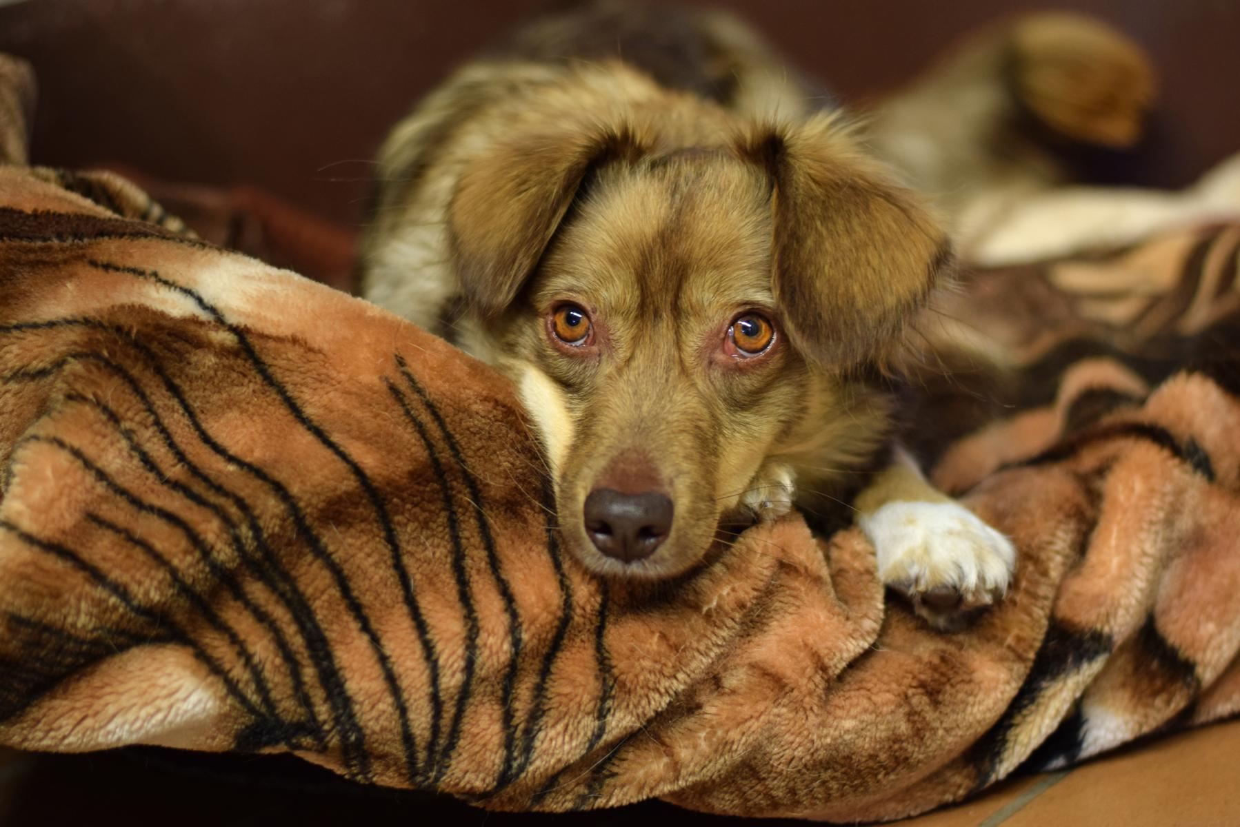 Hamburger Tierschutzverein 1 - Hamburger Tierschutzverein (HTV) hilft Hunden von obdachlosen Menschen