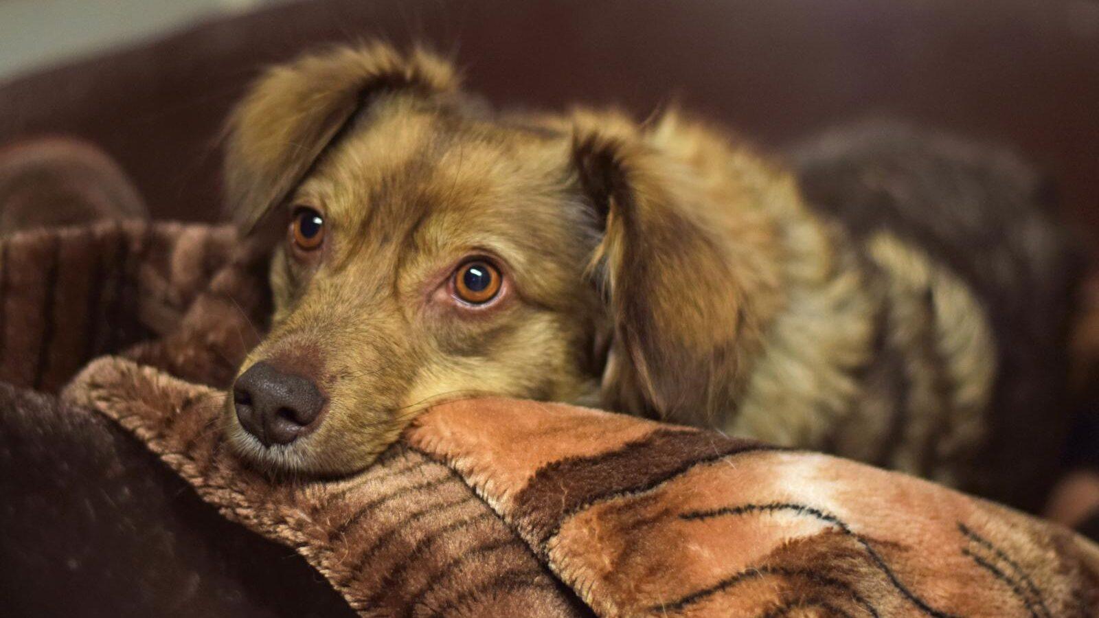 Hamburger Tierschutzverein (HTV) hilft Hunden von obdachlosen Menschen
