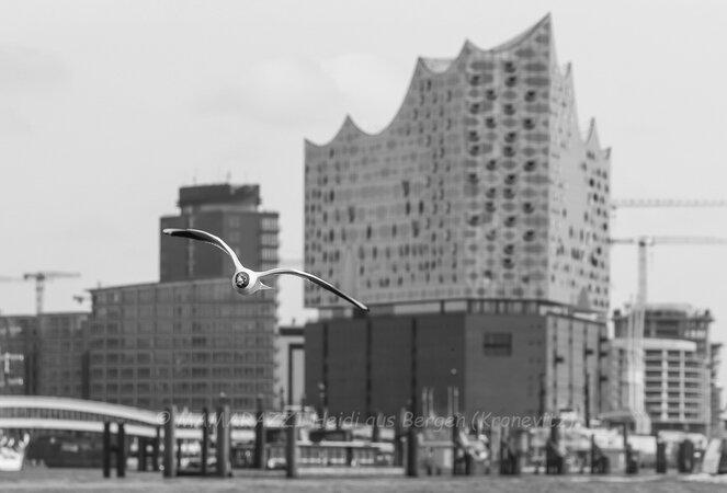 unbenannt 0052 663x450 - Der Hamburger Hafen im CORONA-Frühling